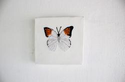Butterflies flew around (display)