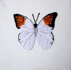 Butterflies flew around