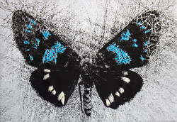 Clue Butterfly