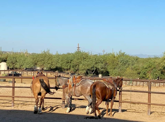 Our horses at Tanque Verde Ranch