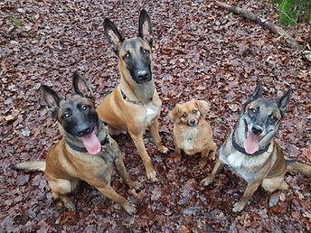Hunde Blutspende.JPG