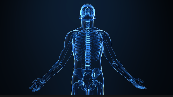Overview of Musculo-Skeletal system