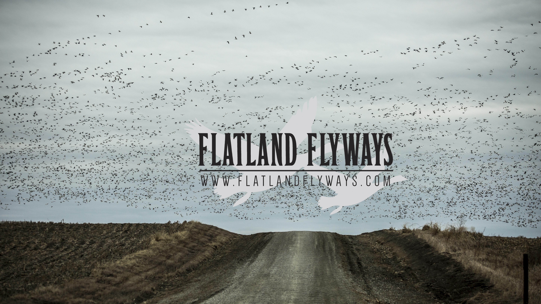 flockofsnowsonroad.jpg