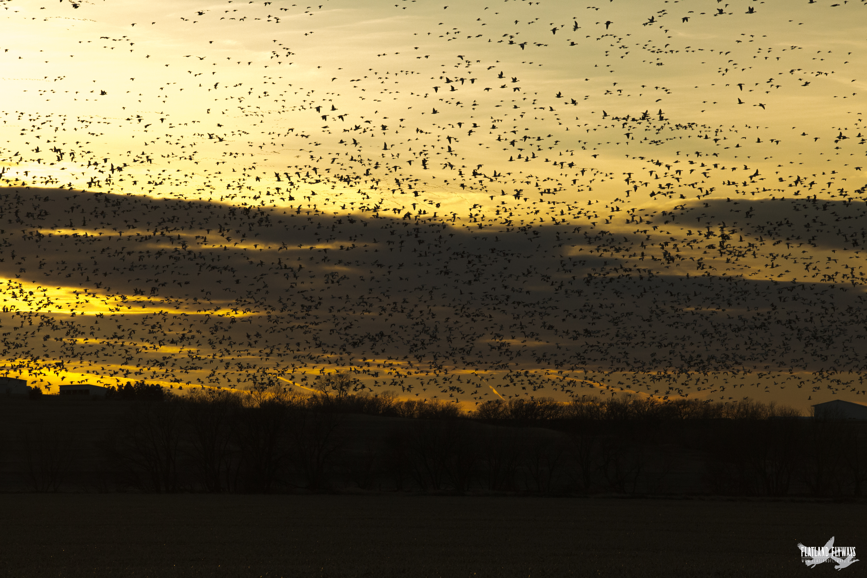 sunsetsnows.jpg
