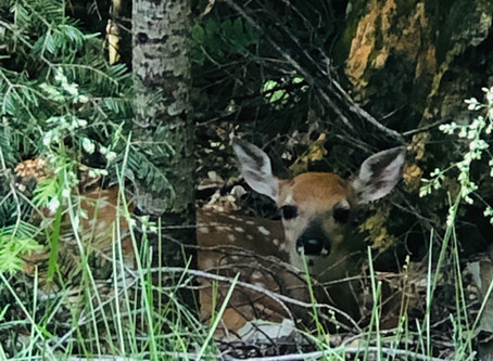 Look what we saw in the woods!