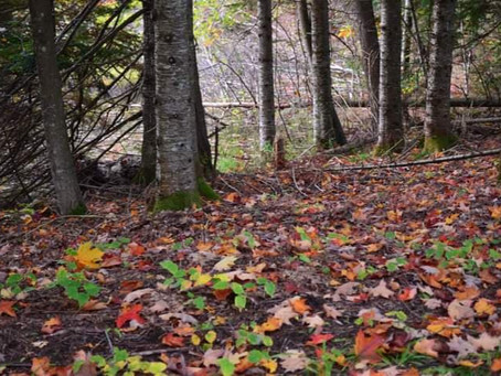 A few last moments of fall....