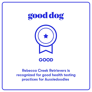 good dog breeder aussiedoodle great good excellent ethical responsible badge certified