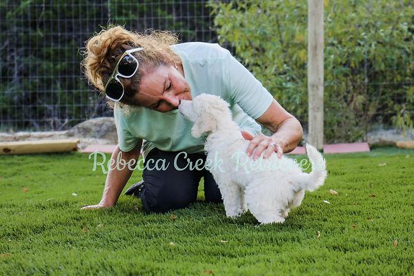 rebecca creek retrievers big liza owner breeder trainer