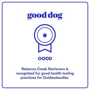 good dog breeder poodle great good excellent ethical responsible badge certified