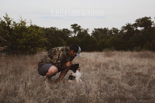 rebecca creek retrievers junior owner breeder trainer