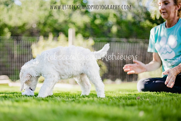 watermarked poodle pose temp test andre