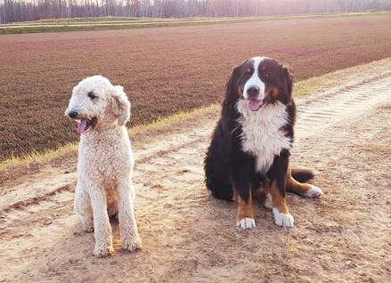 Duke and Willow
