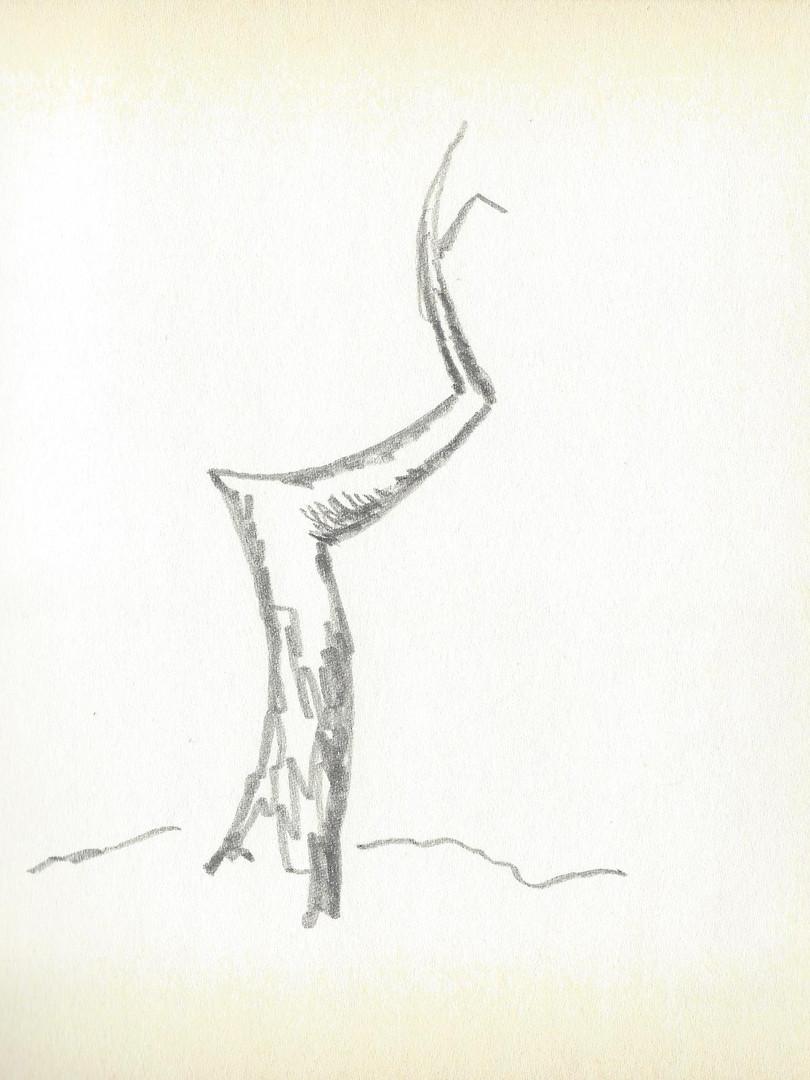 LCn1 (3).jpg