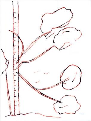 2010_Araucaria 001 (36).jpg