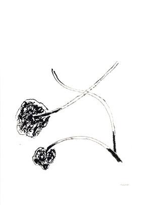 2010_Araucaria 001 (1).jpg