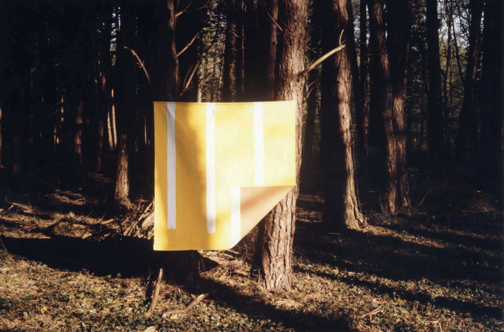 EXP_IND_1984_Forêt de Moyeuvre-Grande_3