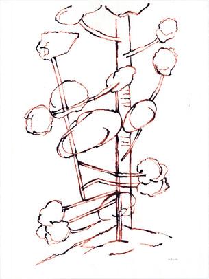 2010_Araucaria 001 (32).jpg