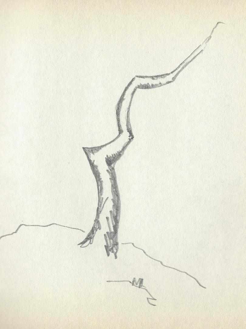 LCn1 (1).jpg