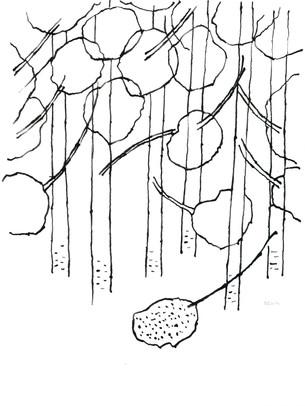 2010_Araucaria 001 (50).jpg
