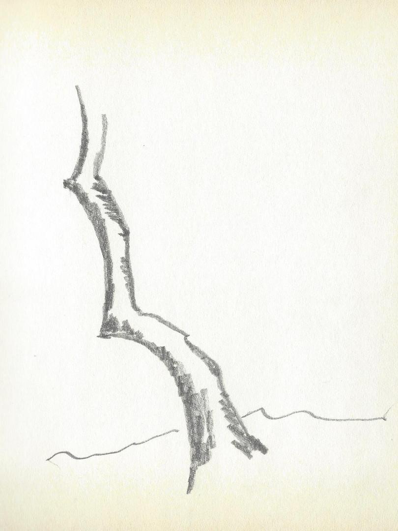 LCn1 (13).jpg