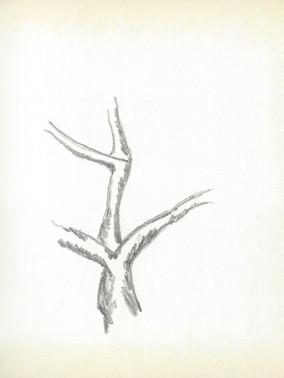 LCn1 (8).jpg