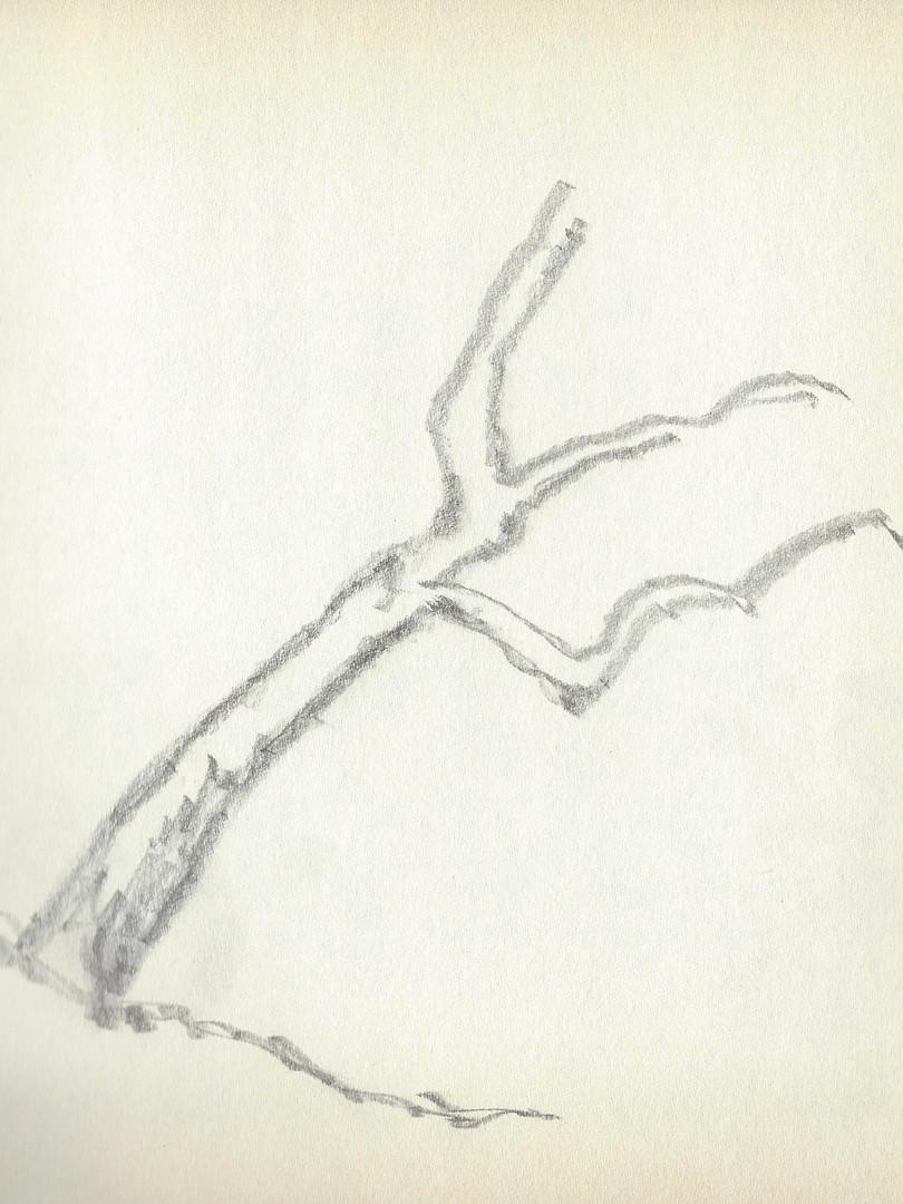LCn1 (31).jpg