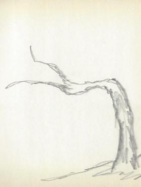 LCn1 (39).jpg