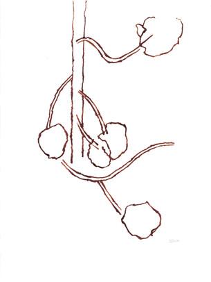 2010_Araucaria 001 (56).jpg