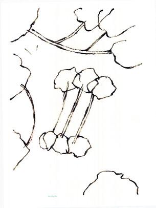 2010_Araucaria 001 (42).jpg