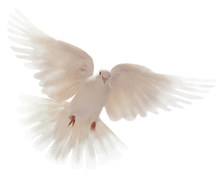 Dove003A.png