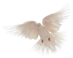 Dove003B.png