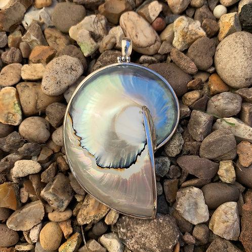 Nautilus Shell Grey Pendant - Medium