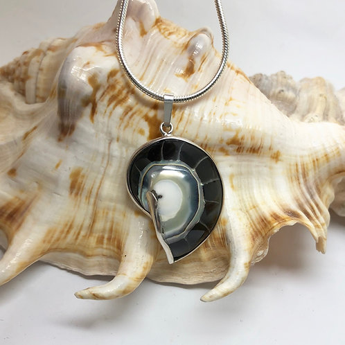 Nautilus Shell Black - Small