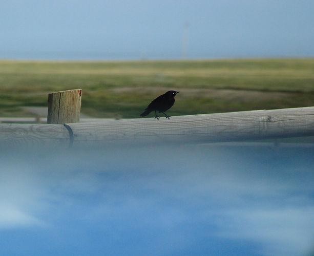 birdskysmall.jpg