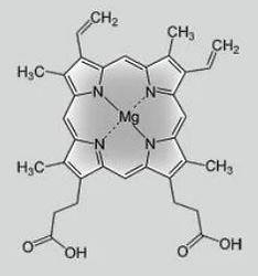 хлорофилл.JPG
