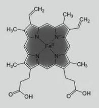 гемоглобин.JPG