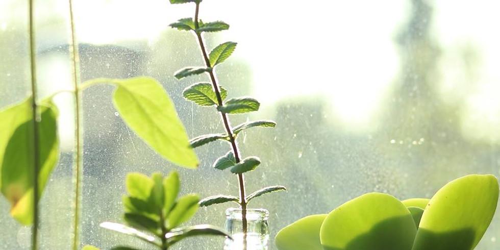 'Plant sharing' Propagation Evening