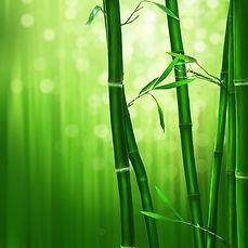 bamboo-1045972_960_720.jpg