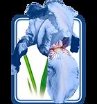 Стома-Денталь web_logo.png