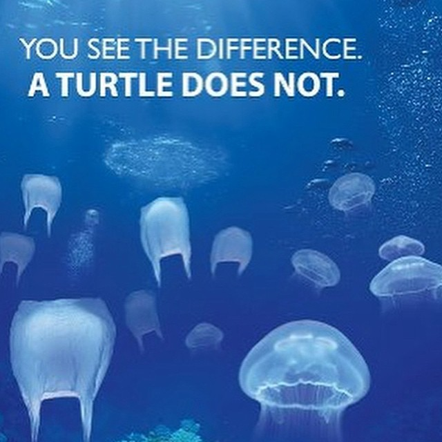 Image result for jellyfish vs plastic bag