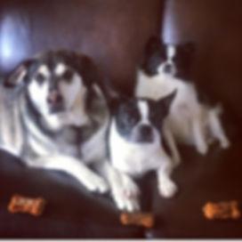 dogs 2 .jpg