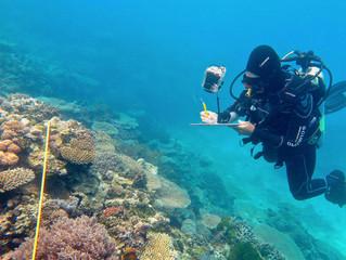 Japans grösstes Korallenriff weitgehend abgestorben