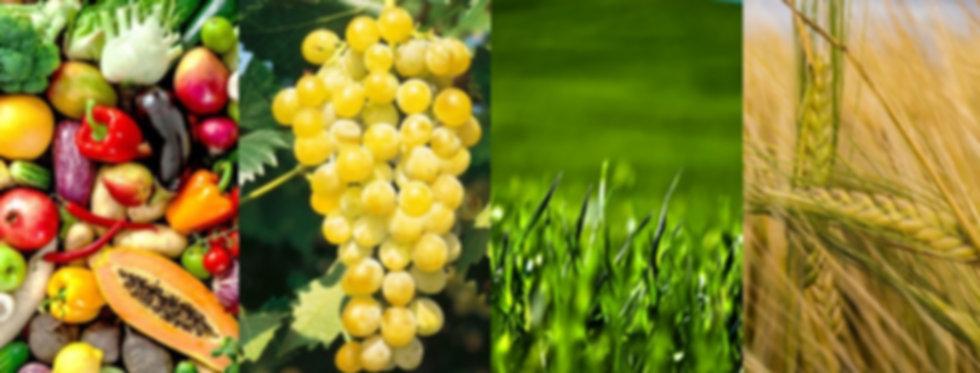 Agroracio (1).jpg