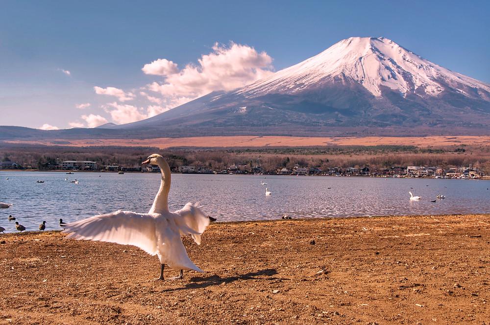 Monte Fuji por Marcel Kato
