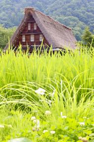 Gassho Style House