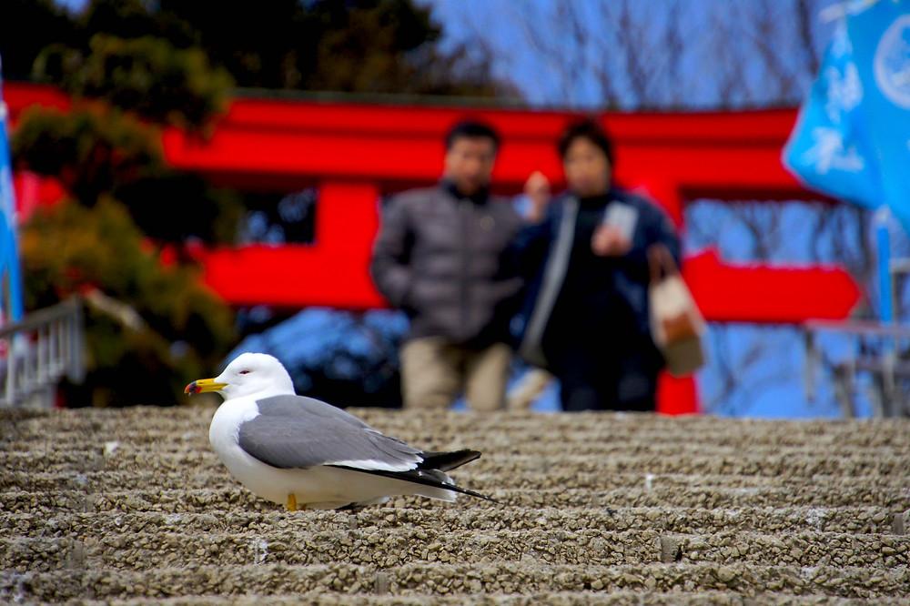 Santuário Kabushima, na província de Aomori: espaços religiosos são experiência significativa para os turistas estrangeiros. / foto: Roberto Maxwell