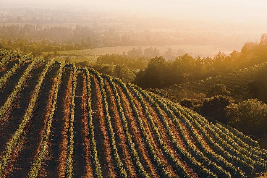 California-Vineyard-1500x1000.jpg