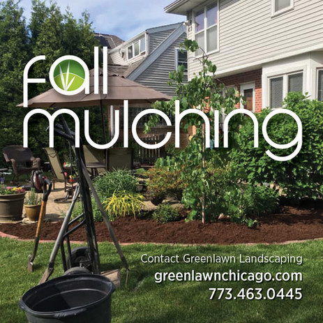Autumn Mulching | Give Your Plants a Better Chance to Survive Winter with Leaf Mulch!