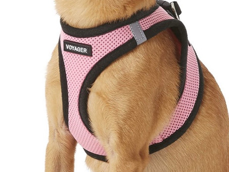 Our Favorite Dog Harnesses For Dog Walks