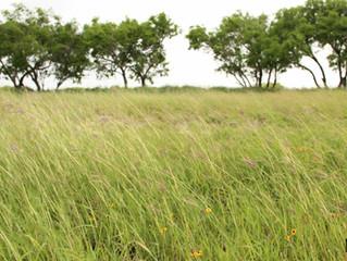 Gratitude: Land, Partnerships, Respite Care, and You